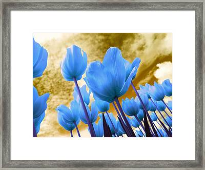 Blue Flowers In The Sky Framed Print by Ca Photography