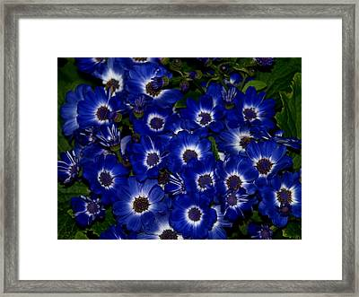 Blue Flowers Framed Print by Laura Allenby