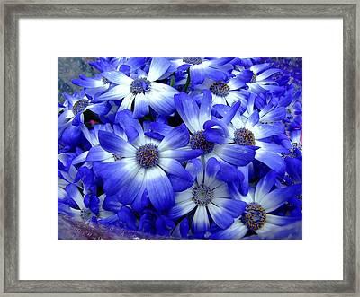 Blue Flowers Framed Print by Simona Stroescu