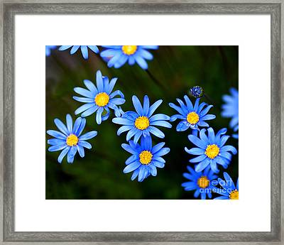 Blue Flowers Framed Print by Wingsdomain Art and Photography