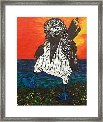 Blue Footed Booby Bird In The Sunset Framed Print by Morgan Carroll