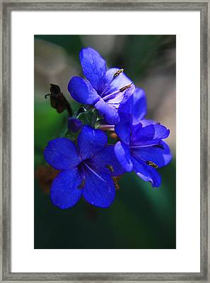 Blue For The Sun Framed Print