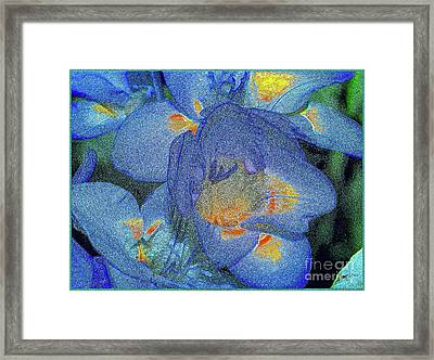 Framed Print featuring the photograph Blue Freesia's by Lance Sheridan-Peel