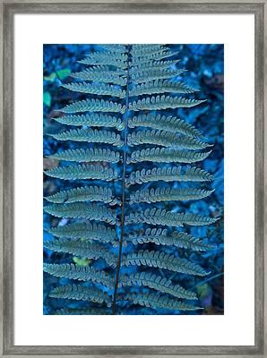 Blue Frond Framed Print by Douglas Barnett