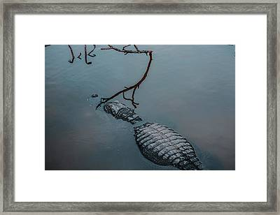 Blue Gator Framed Print