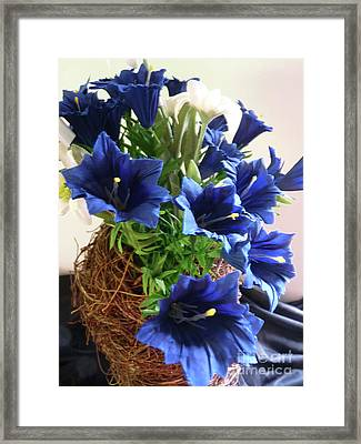 Blue Gentian  Framed Print