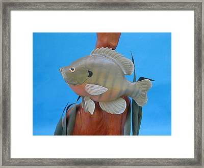 Blue Gill Framed Print by Jack Murphy