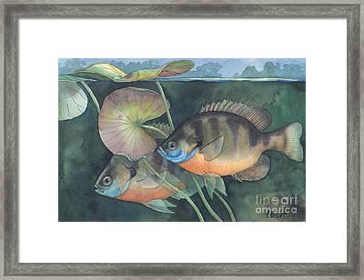 Blue Gill Framed Print