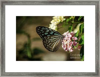 Blue Glassy Tiger Framed Print
