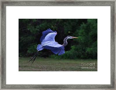 Blue Glide Framed Print by Deborah Benoit