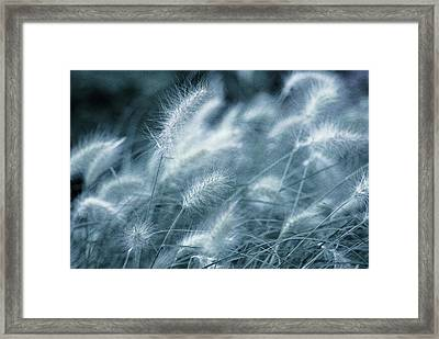 Blue Gras Framed Print