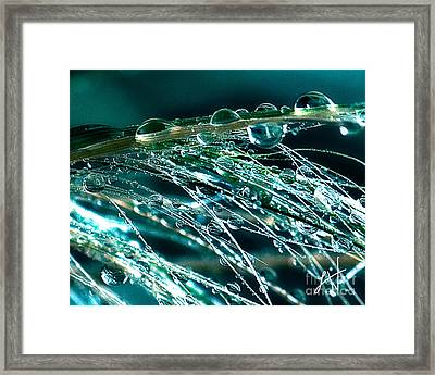 Blue Grass Framed Print