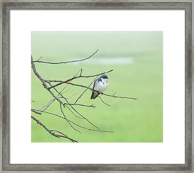 Blue Headed Bird Framed Print by Randi Shenkman