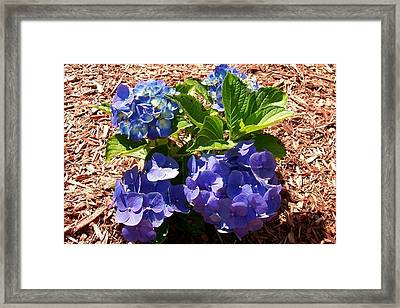 Framed Print featuring the digital art Blue Heaven by Barbara S Nickerson