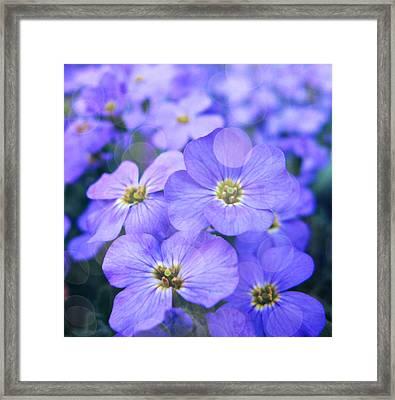 Blue Heaven Framed Print by Cathie Tyler