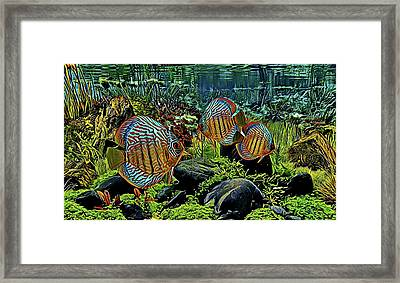 Blue Heckel Discus Framed Print
