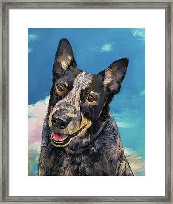 Blue Heeler Framed Print by Michael Creese
