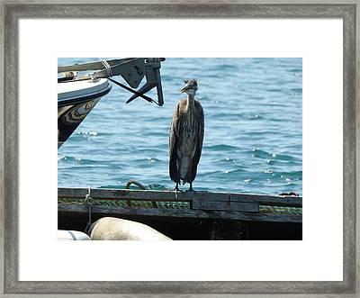 Blue Heron #2 Framed Print