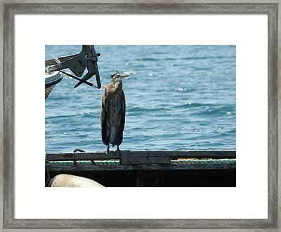 Blue Heron #3 Framed Print