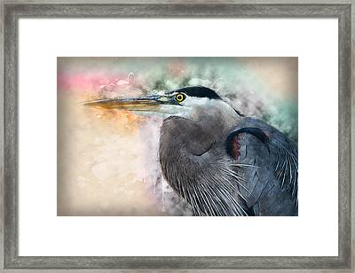 Blue Heron Framed Print by Andrew Millar