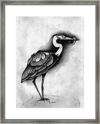 Blue Heron Framed Print by Anne Rickard