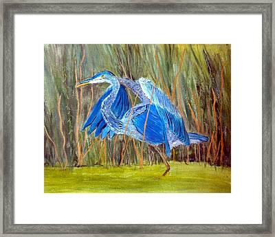 Blue Heron In Viera  Florida Framed Print