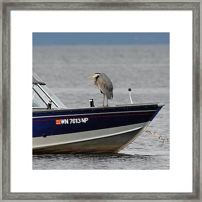 Blue Heron Boat Ride Framed Print