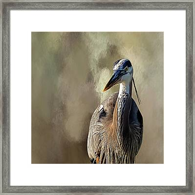 Blue Heron Framed Print by Cyndy Doty