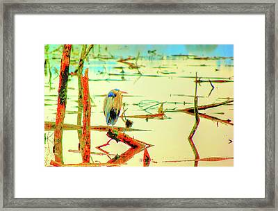 Framed Print featuring the photograph Blue Heron by Dale Stillman