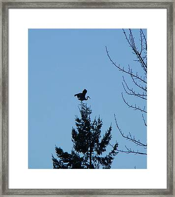Blue Heron Dance Framed Print
