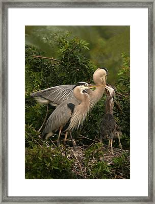 Framed Print featuring the photograph Blue Heron Family by Shari Jardina