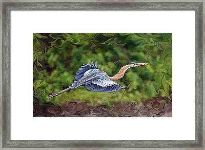 Framed Print featuring the photograph Blue Heron Flight by Shari Jardina