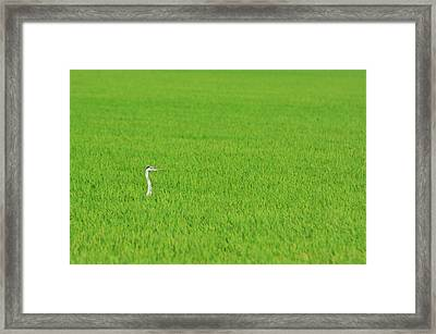 Blue Heron In Field Framed Print