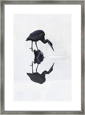 Blue Heron In High Key Framed Print