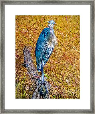 Framed Print featuring the photograph Blue Heron In Maryland by Nick Zelinsky