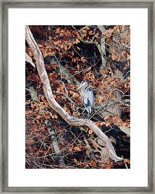 Blue Heron In Tree Framed Print