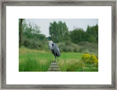 Blue Heron Framed Print by Jan Daniels