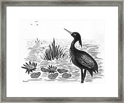 Crowned Night Heron Lily Pond Paradise In Ink D1 Framed Print