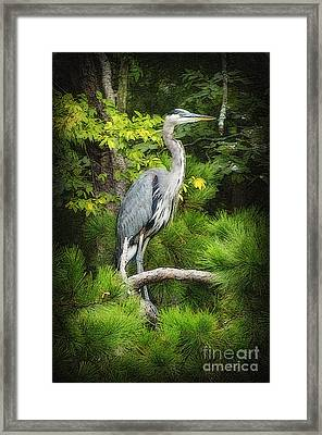 Blue Heron Framed Print by Lydia Holly