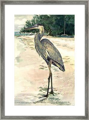 Blue Heron On Shell Beach Framed Print