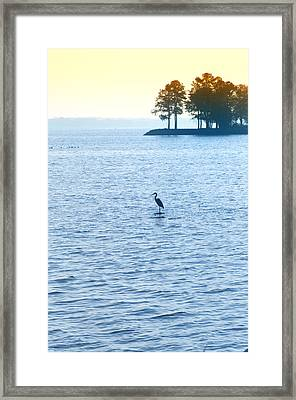 Blue Heron On The Chesapeake Framed Print by Bill Cannon
