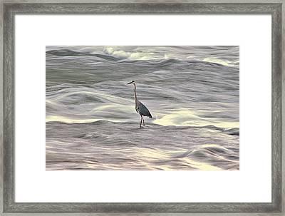 Blue Heron On The Grand River Framed Print