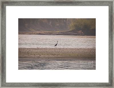 Blue Heron On The Yellowstone Framed Print