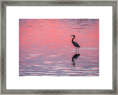 Blue Heron - Pink Water Framed Print