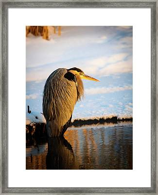 Blue Heron Resting Framed Print