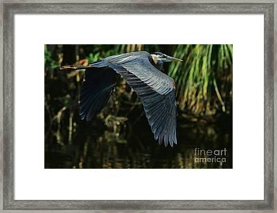 Framed Print featuring the photograph Blue Heron Series The Pond by Deborah Benoit