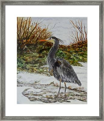 Blue Heron Framed Print by Sher Nasser