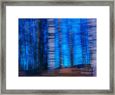 Blue Hour In Birch Forest Framed Print