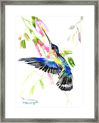 Blue Hummingbird Framed Print