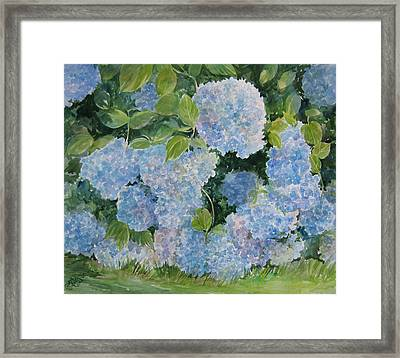 Blue Hydrangea 2 Sold Framed Print